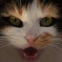 Cat :: Nikolai Savin