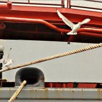 Красный арт с чайками :: Кай-8 (Ярослав) Забелин