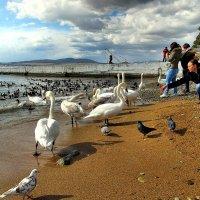 Птички :: Падонагъ MAX