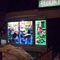 Вечерние цветы. :: Ольга Кривых
