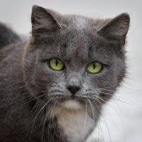 У беды глаза зелёные... :: Вера Лучникова
