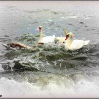 Лебеди и море... :: Нина Бутко