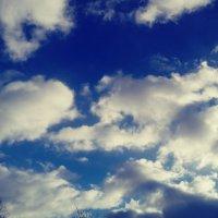 Зимнее небо :: Daria Zhdanova