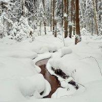 Лесной ручей! :: Владимир Шошин