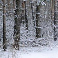 Графика зимы :: Елена Шемякина