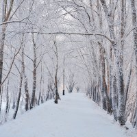 Аллея на речной дамбе в зимнем убранстве :: Екатерина Торганская