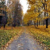 Осень в парке :: Падонагъ MAX