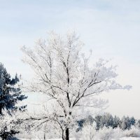 Морозный день. :: Андрей Щукин