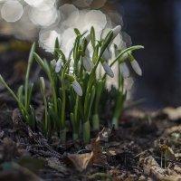 весна :: Елена Куценко