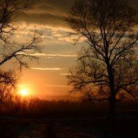 Закат на острове Татышева :: Светлана Грызлова