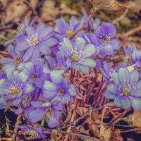 С мечтою о весне :: Любовь