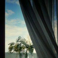 Мимозистое утро... :: Liliya