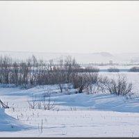 Карамышево 15февраля. :: Юрий Ефимов