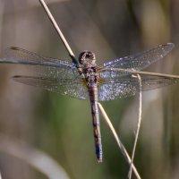 Серебряные крылышки :: Valentina M.