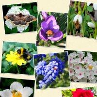 Насекомые и цветы!!! :: Светлана Масленникова