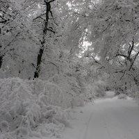 Красоты зимушки - зимы :: Наталья Джикидзе (Берёзина)