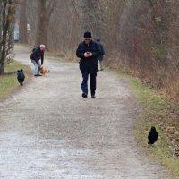 Воскресная прогулка... :: Galina Dzubina