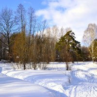 Лесными тропами :: Natalia Alekseeva