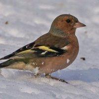 В снегу :: Павел Руденко