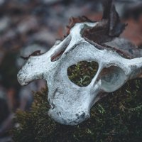 маска смерти :: Sergey Bagach