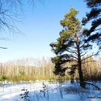 На краю леса :: Андрей Снегерёв