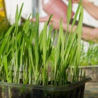 Выращиваем витамины :: Марина Ломина