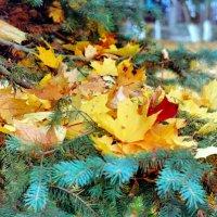 Осенние листья :: Падонагъ MAX