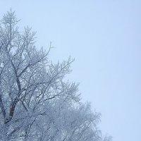 Зима.2017 :: Артём Бояринцев