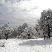 Кружится вновь снежинок хоровод :: Наталья (D.Nat@lia)