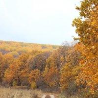 Золотая осень :: Kate Knyazeva