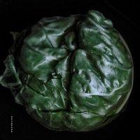 капустный мозг :: Роза Бара