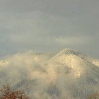 Гора Кума,Сочи. :: АНДРЕЙ ШЕВЧЕНКО