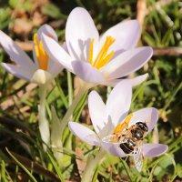 Весна :: Alexander