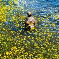 Плавание в цветах :: Karolina