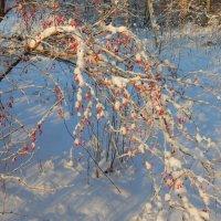 зимний барбарис :: linnud