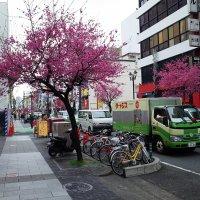 Нагоя, на улицах города :: Swetlana V