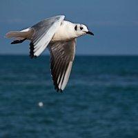 чайка 4 :: Эдуард Тищенко