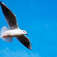 чайка 3 :: Эдуард Тищенко