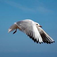 чайка 2 :: Эдуард Тищенко