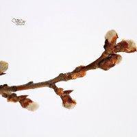 Весна идет :: Вячеслав Ложкин