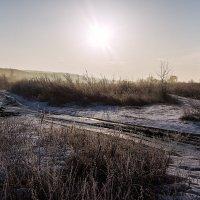 Солнечное утро :: Виталий Павлов