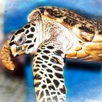 Черепаха :: Alexander Dementev