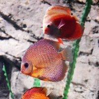 Рыбки в аквариуме... :: Дмитрий Петренко