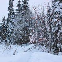 Зимний пейзаж :: Александр Щеклеин