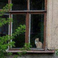 На окне :: Ольга Томаровская