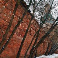 Разрушение стен Симонова монастыря деревьями. :: Владимир Болдырев