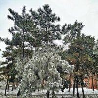 Ледяной дождь :: Дмитрий
