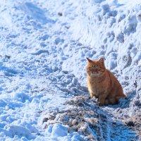 Рыжий гулена в ожидании весны :: Вячеслав