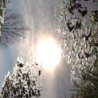 Озеро Хевиз :: Liubov