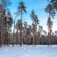 Зимние пейзаж. :: Владимир Лазарев